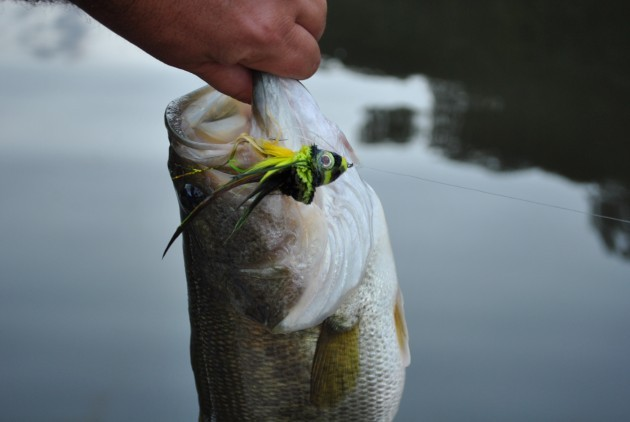 Fontana Lake Largemouth Bass