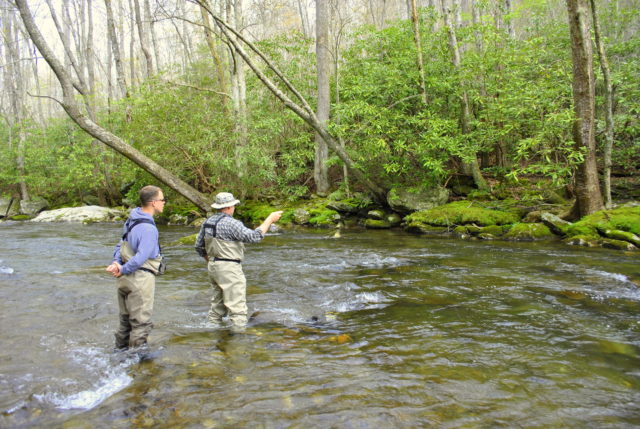 Fly Fishing, Gatlinburg, Pigeon Forge, Sevierville, Tennessee, Great Smoky Mountains, Fly Fishing the Smokies