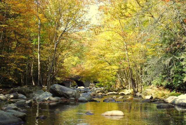 Fall Fly Fishing the Great Smoky Mountains, Fly Fishing the Smokies, Trout Fishing Guides in Smoky Mountains Gatlinburg Pigeon Forge Sevierville Cherokee Bryson City