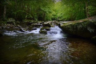 Great Smoky Mountains Trout Stream