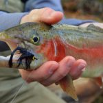 Tuckasegee River Fly Fishing Guides, Fly Fishing the Smokies, Eugene Shuler Fly Fishing,