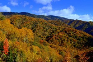 Smoky Mountain Fly Fishing, Fly Fishing the Smokies, Gatlinburg Fly Fishing Guides