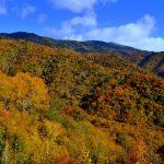Smoky Mountain Fly Fishing, Fly Fishing the Smokies, Gatlinburg Fly Fishing Guides