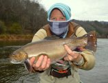 Brook Trout Tuckasegee River