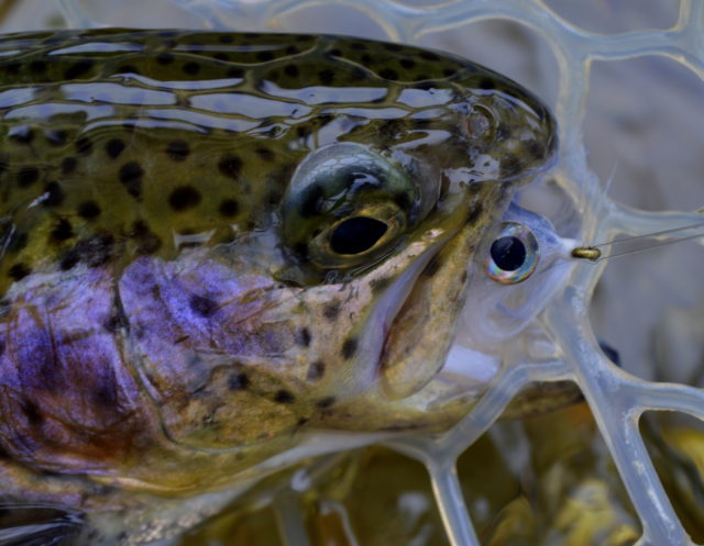 Great Smoky Mountains Fishing Report February 27th, Fly Fishing the Smokies