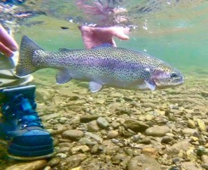 Smoky Mountain Fly Fishing Guides Gatlinburg Pigeon Forge Sevierville Townsend Maryville Knoxville, Fly Fishing Guides ,