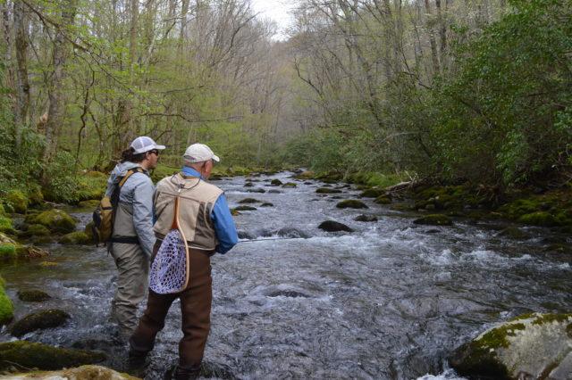 Great Smoky Mountains Fishing Report April 24th, Smoky Mountains Fly Fishing report, Fly Fishing the Smokies