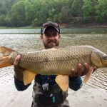 Carp Photo Gallery, Carp Fly Fishing Guides and Trips. Smoky Mountains Fly Fishing Guides, Carp Fly Fishing North Carolina