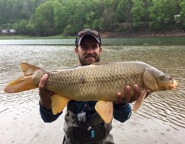 Carp Fly Fishing Guides and Trips. Smoky Mountains Fly Fishing Guides, Carp Fly Fishing North Carolina