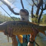 Carp Photo Gallery, Carp Fly Fishing Guides