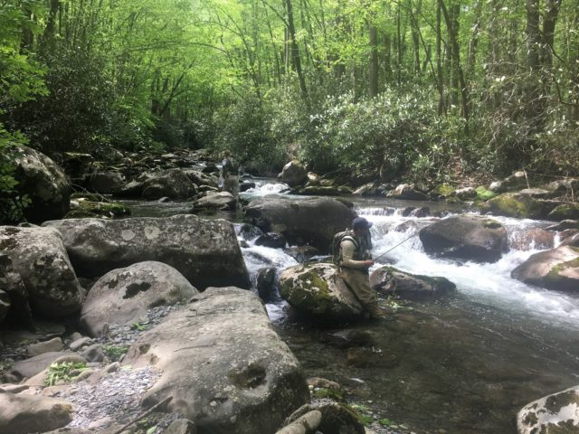 Smokies Backcountry Trip, Fly Fishing the Smokies, SMoky Mountains Trout Fishing,