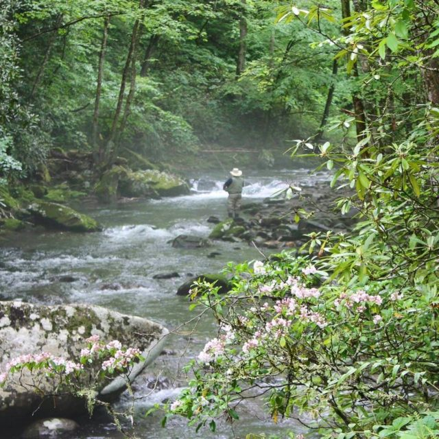 Summer Fly Fishing, Summer Fly Fishing Gatlinburg Pigeon Forge Sevierville, Smoky Mountains Fly Fishing Guides