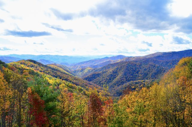 October 29th Fly Fishing Report, Fly Fishing the Smokies, Smoky Mountain Fly Fishing,