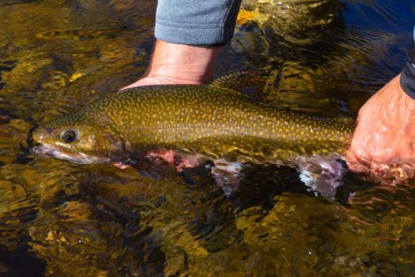 Brook Haven Private Water Fly Fishing, North Carolina