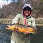 Tuckasegee River Fly Fishing Report for March, Fly Fishing the Smokies. Big Brown Trout,