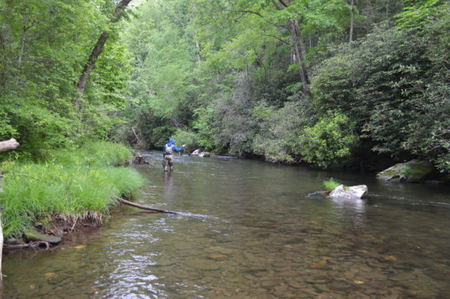 Hazel Creek Fly Fishing Report May 2018, Hazel Creek Fly Fishing Guides Tips Report, Hazel Creek Fly Fishing Report