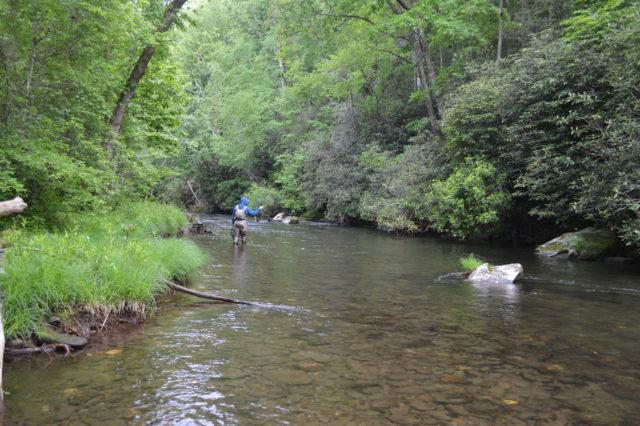 Hazel Creek Fly Fishing Report May 2018, Hazel Creek Fly Fishing Guides Tips Report, Hazel Creek Fly Fishing Report