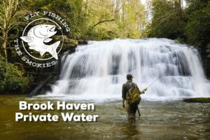 Brook Haven Fly Fishing, Fly Fishing the Smokies Private Water,
