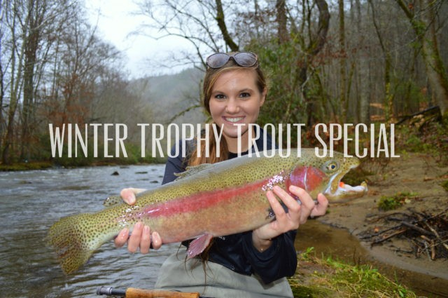 Winter Trophy Trout Special, Fly Fishing the Smokies, Fly Fishing Guides Great Smoky MOuntains Gatlinburg Bryson City Cherokee
