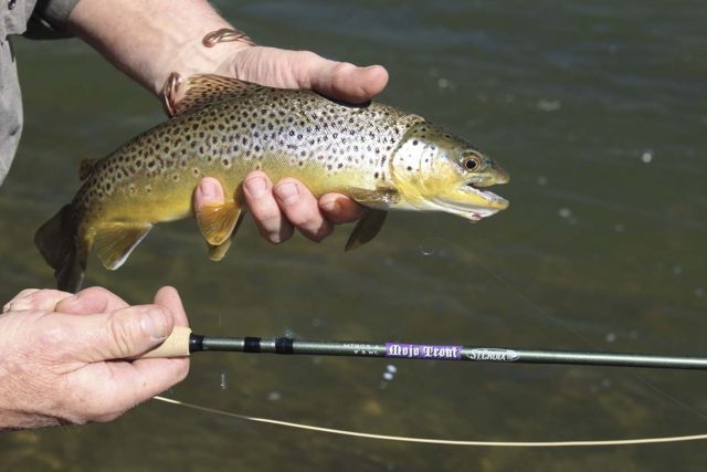 St Croix Mojo Trout Rod, Mojo Trout Fly Rod, Smoky Mountain Fly Shop, Fly Fishing the Smokies,