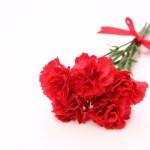 母の日のカーネーションの本数は何本がいい?意味や花言葉は変わるの?