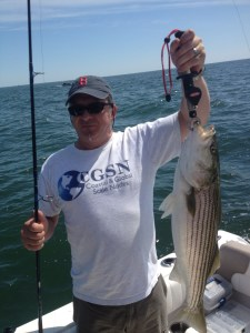 Boston striped bass on squid light tackle