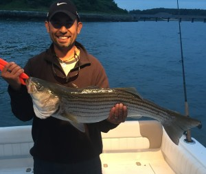 Boston dusk striped bass