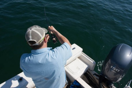 Buzzards Bay Striper on the fly