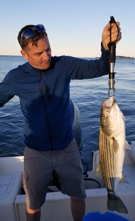 Another Boston Harbor keeper sized striped bass