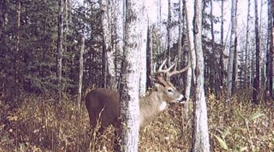 ... hey, nice buck!!!