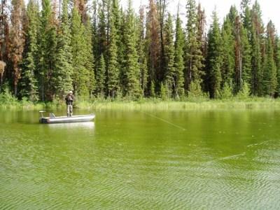Sight Fishing Rainbows - beautiful BC Stillwater lake