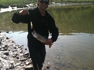 ... Peace River Bull Trout