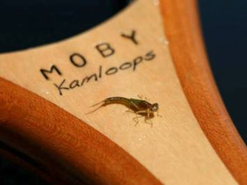 MOBY Kamloops Trophy Fly Fishing Nets - Damsel on a MOBY Kamloops