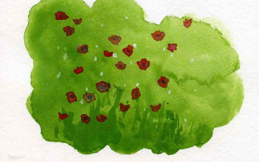 Poppies – Daily painting #689