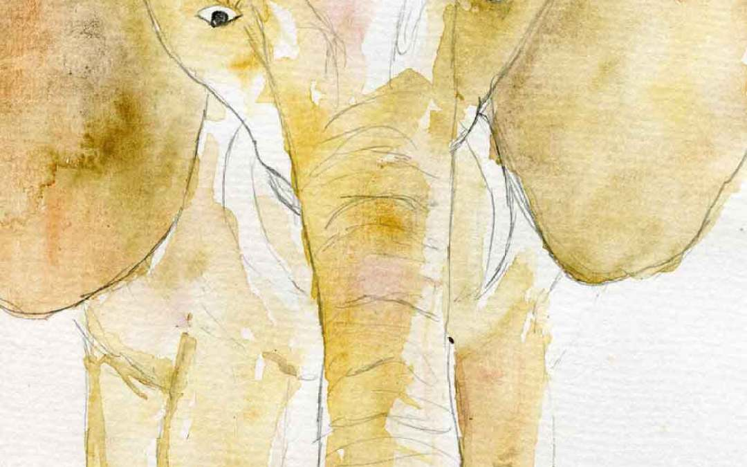 Elephant #11 – Daily Painting #736 (SOLD)
