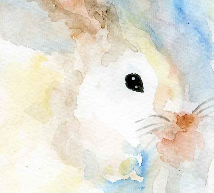 White rabbit (#261)