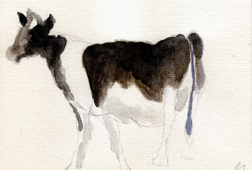 Black and white cow (#958)