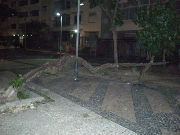 A tree growing sideways at Copacabana Beach at night