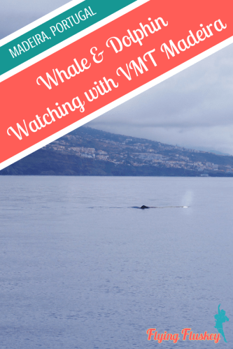 A highlight of our trip to Funchal, Madeira was a whale and dolphin watching trip. We chose with VMT Madeira and here is our full review. #vmtmadeira #madeira #whalewatchin #dolphinwatching