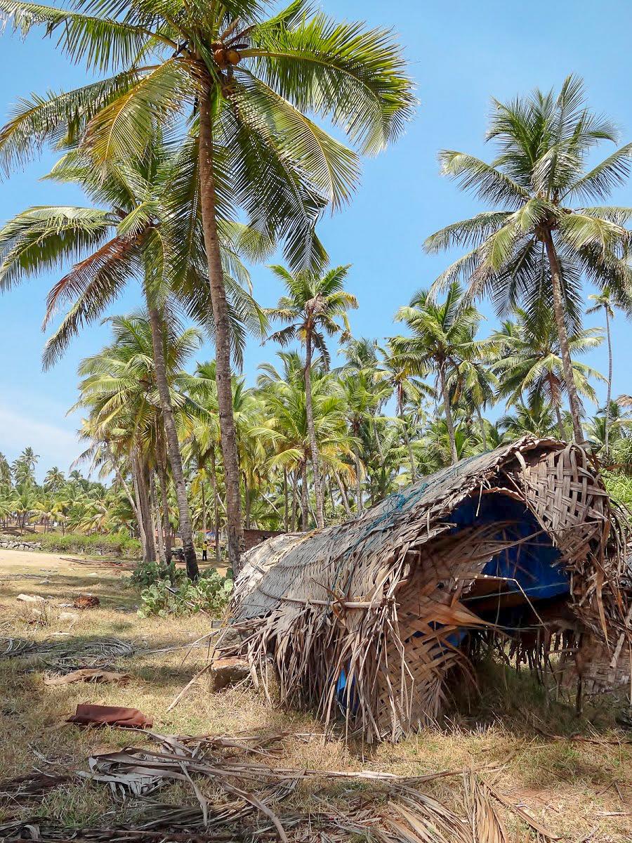 Palm trees and a rattan hut on Odayam beach, Varkala, Kerala, India