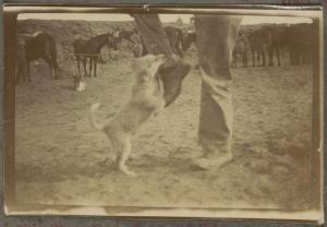https://www.flickr.com/photos/national_library_of_australia_commons/33845770282/