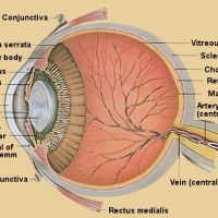 Glaucoma_Just poke me in the eye!