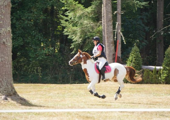 Sports - Horse Event