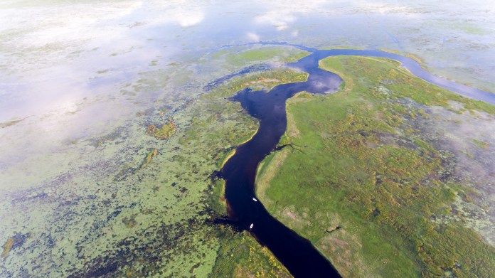 Aerial of the Ibera Marsh.jpg