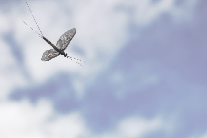 Mosquitoes & mayflies - ep 3 still 3