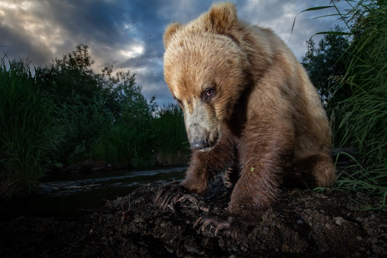How to Stay Safe Fly Fishing in Bear Country