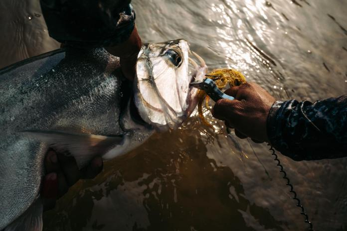 """Payara """"Vampire Fish"""" – Everything You'd Want to Know and Tips for Catching thumbnail"""