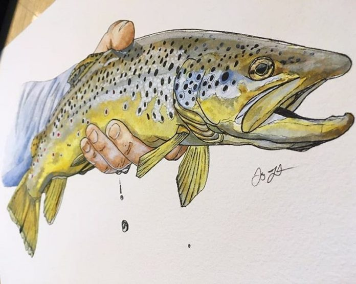 hand drawn trout