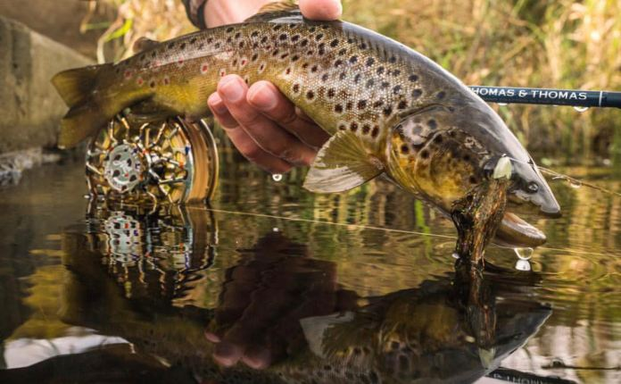 streamer fly trout