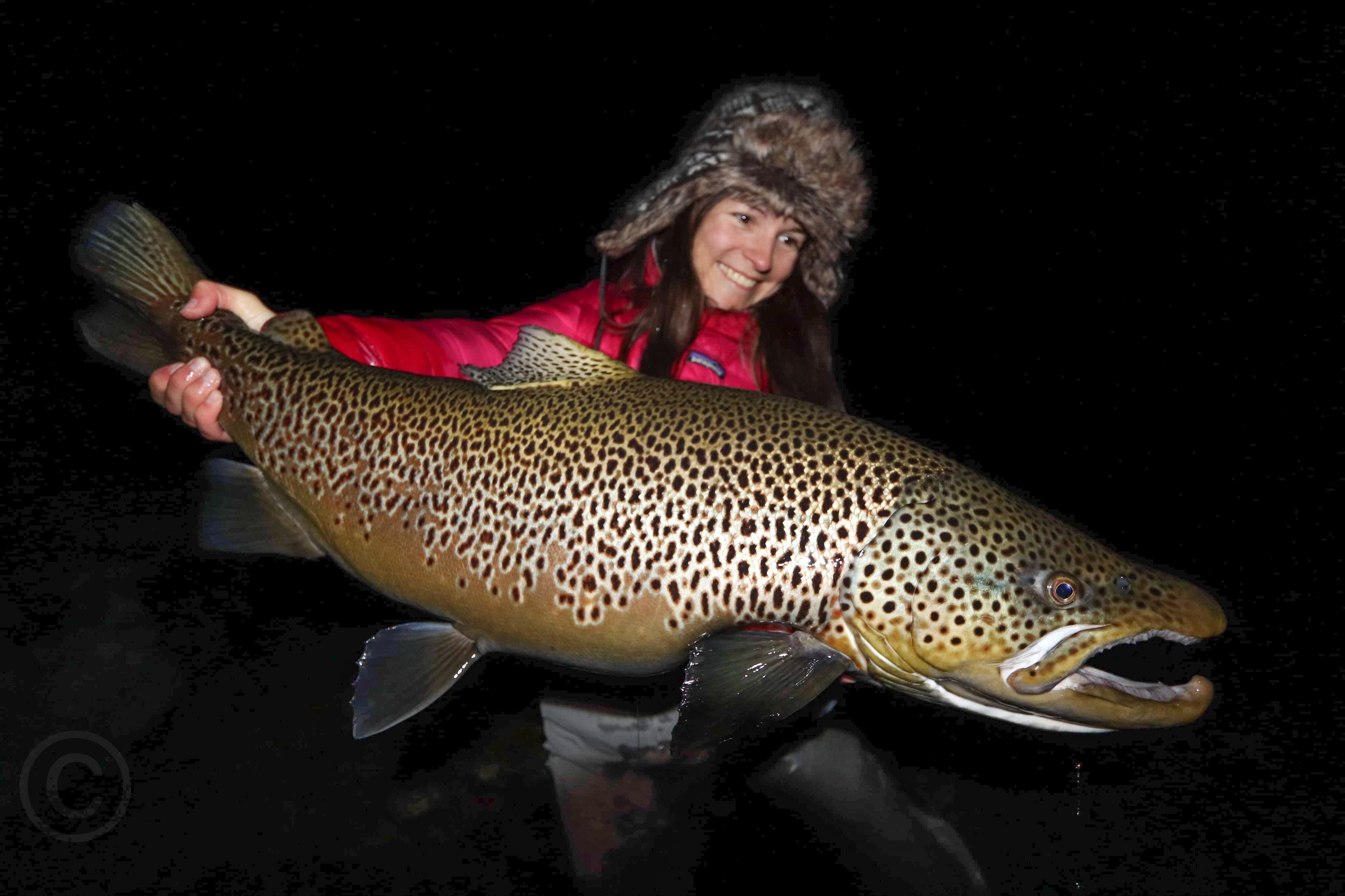 The Biggest Brown Trout in the World - Thingvellir, Iceland - Flylords Mag